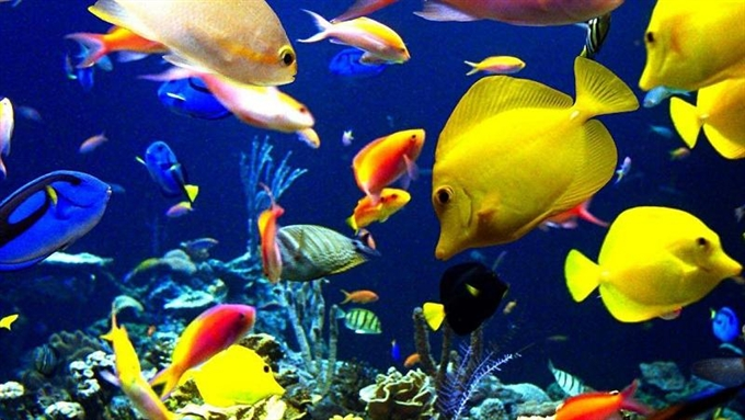 Этот прекрасный подводный мир