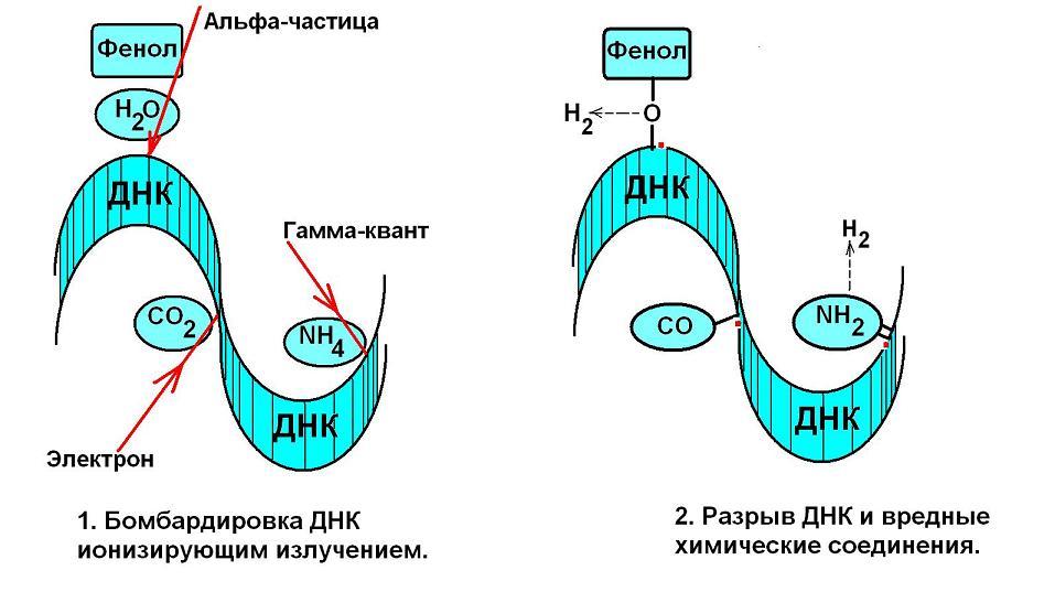 deystvie-rentgenovskih-luchey-na-spermatozoidi