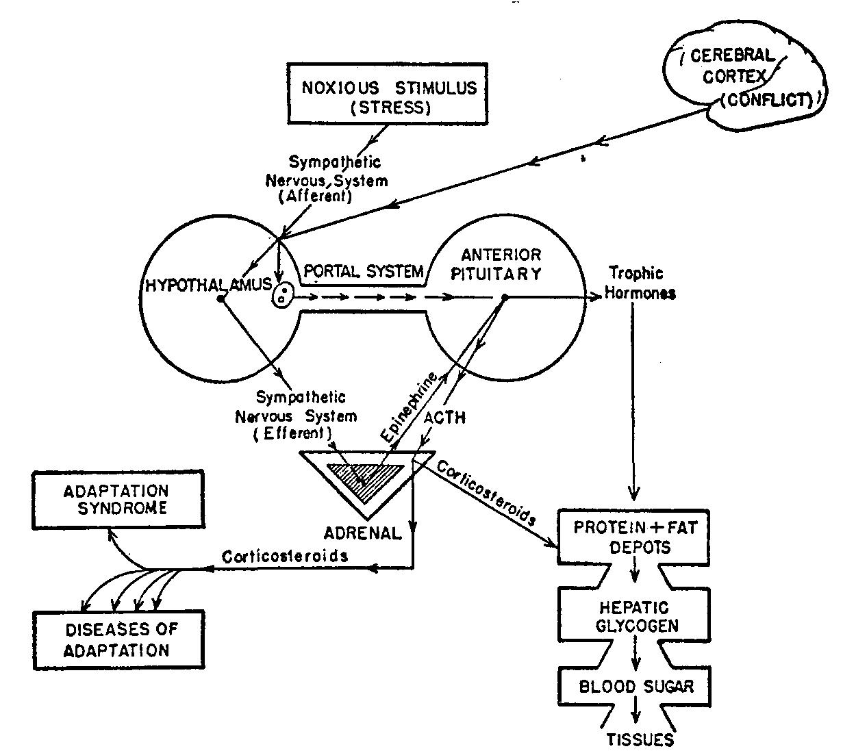 Артериальное давление и холестерин при кратковременной адаптации